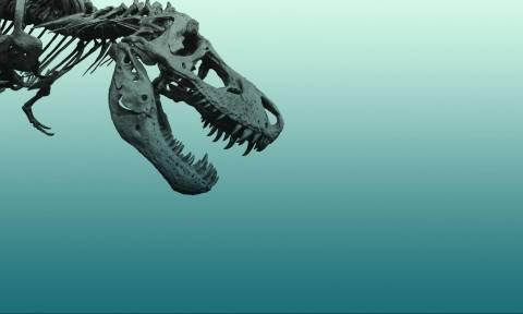 Ανακαλύφθηκε ο γηραιότερος δεινόσαυρος που περπάτησε ποτέ στη γη (Pics+Vid)