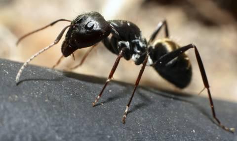 Τεστ: Ποια ομάδα μυρμηγκιών έχει τα περισσότερα μέλη;
