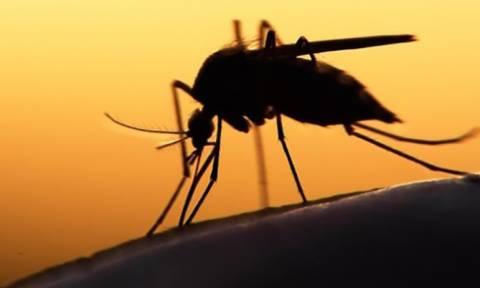 Δες τι πρέπει να τρως για να μην σε τσιμπάνε τα κουνούπια