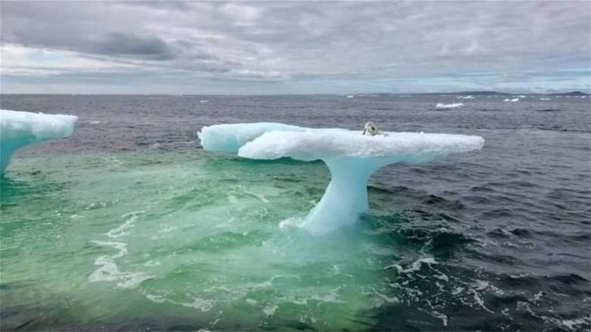 Αλεπού παγιδεύτηκε σε ένα κομμάτι πάγου στην μέση του ωκεανού