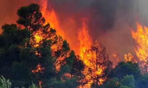 Δύο πύρινα μέτωπα στην Κρήτη: Μεγάλη φωτιά ΤΩΡΑ σε Λασίθι και Αμάρι