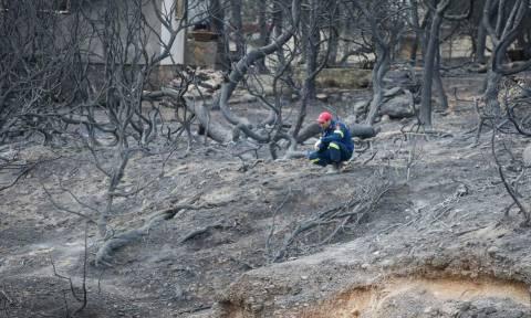 Φωτιά Αττική: Εισαγγελική έρευνα για τις φονικές πυρκαγιές