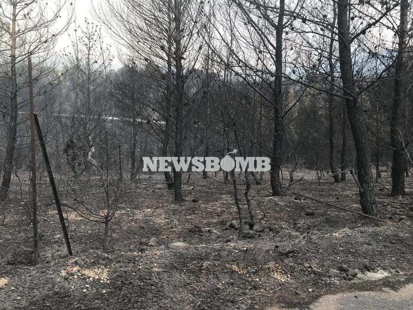 Φωτιά Αττική - Κινέτα: Η πρόγνωση του καιρού για τις πληγείσες περιοχές από τον Τάσο Αρνιακό (vid)