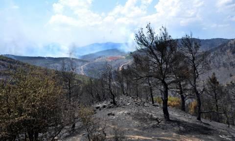 Φωτιά: Στη φυλακή ο Βούλγαρος που συνελήφθη για δασική πυρκαγιά κοντά στο οχυρό Ρούπελ