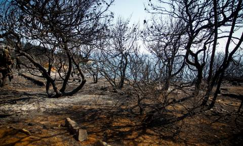 Death toll from Greek fires rises to 79