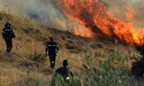 Υπό πλήρη έλεγχο φωτιά στη Ζάκυνθο
