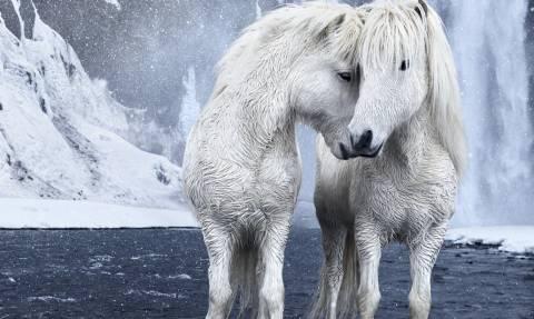 Τα θρυλικά άλογα της Ισλανδίας σε 11 φωτογραφίες που καθηλώνουν! (pics)
