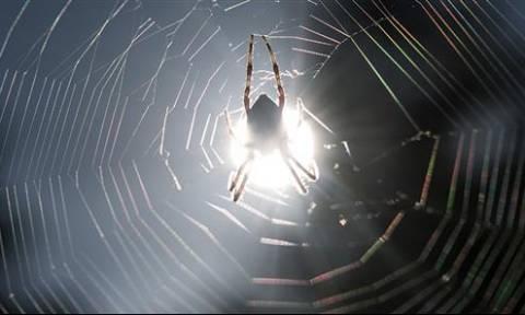 Τρόμος για οικογένεια στα Τρίκαλα - Βρήκαν σπάνια αράχνη - σκορπιό! (photos)