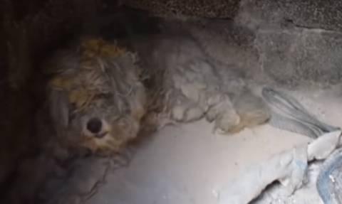 Ελπίδα στα αποκαΐδια: Βρήκαν σκύλο ζωντανό μέσα σε φούρνο καμένου σπιτιού στο Μάτι (vid)