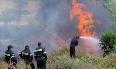 Φωτιά: Προσήχθησαν δύο ανήλικοι για πρόκληση πυρκαγιάς στην Κρυοπηγή Χαλκιδικής