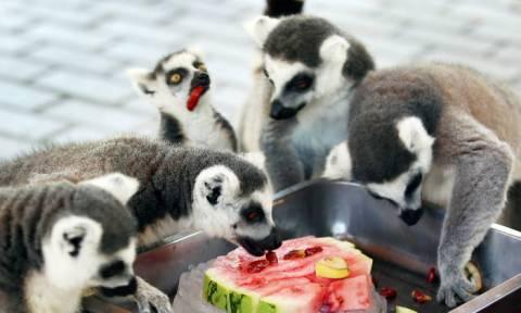 Πρόστιμο σε επισκέπτες που ταΐζουν τα ζώα θα επιβάλλει ζωολογικός κήπος