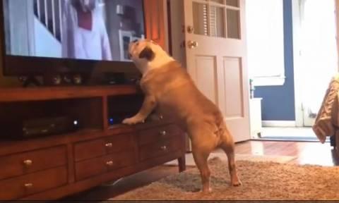 H απίστευτη αντίδραση ενός σκύλου την ώρα που βλέπει θρίλερ! (vid)