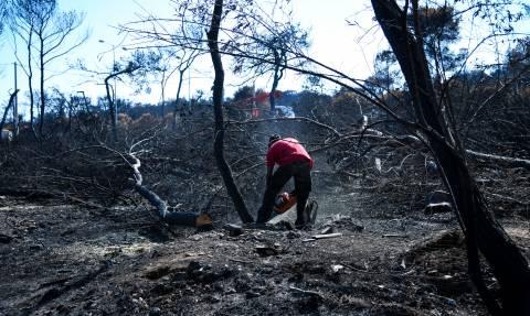 Μακραίνει η μακάβρια λίστα: Στους 89 οι νεκροί από τη φωτιά στο Μάτι