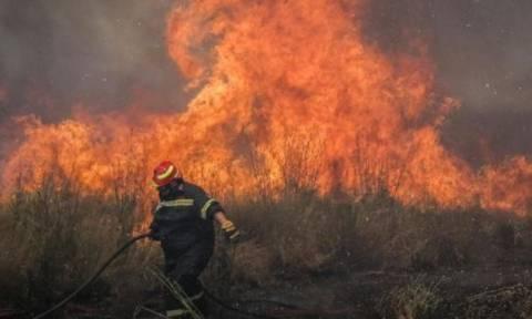 Υπό έλεγχο η φωτιά στη Γαλάζια Ακτή στο Σχοινιά