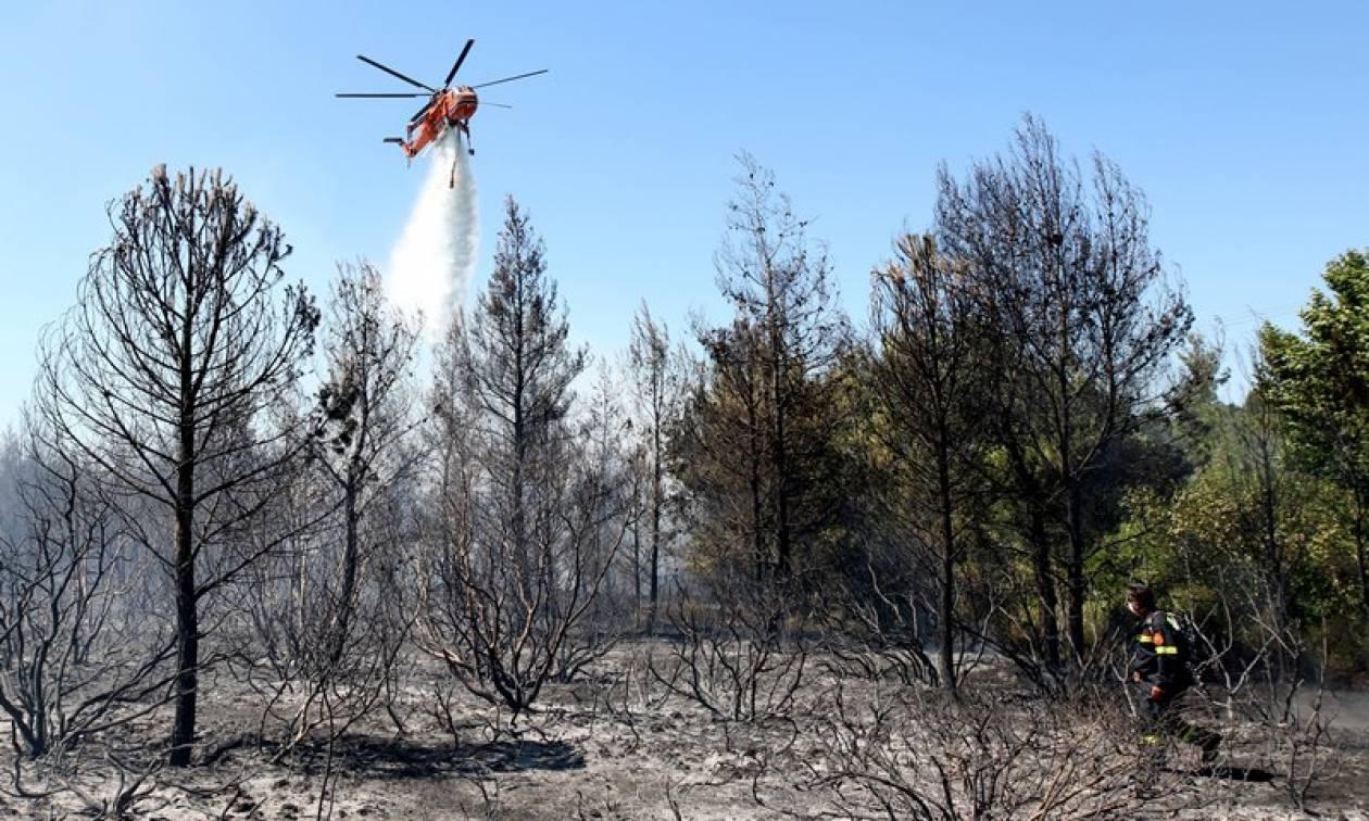 Συνελήφθη ύποπτος για την πυρκαγιά στη Σάμο - Χρησιμοποίησε αναπτήρα για να βάλει τη φωτιά
