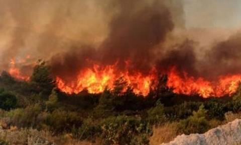 Μεγάλες φωτιές στη Ζάκυνθο: Δύο πύρινα μέτωπα με διαφορά λίγων λεπτών (vid+pics)