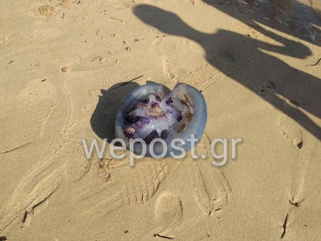 Τρόμος στη Θεσσαλονίκη: Κοίταξαν στην άμμο και δεν πίστευαν στα μάτια τους με αυτό το σπάνιο θέαμα!