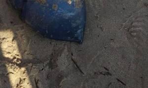Τρόμος στη Θεσσαλονίκη: Κοίταξαν στην άμμο και δεν πίστευαν στα μάτια τους με το σπάνιο αυτό θέαμα!