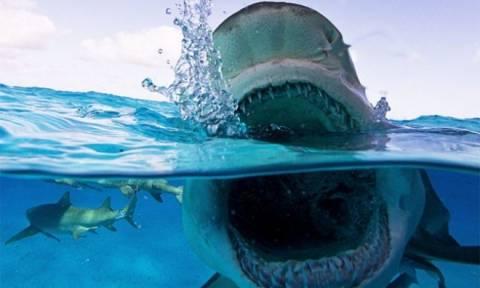 Ψαράδες έπιασαν καρχαρία – «τέρας» στην Κεφαλονιά – Δείτε τη φωτογραφία που σοκάρει