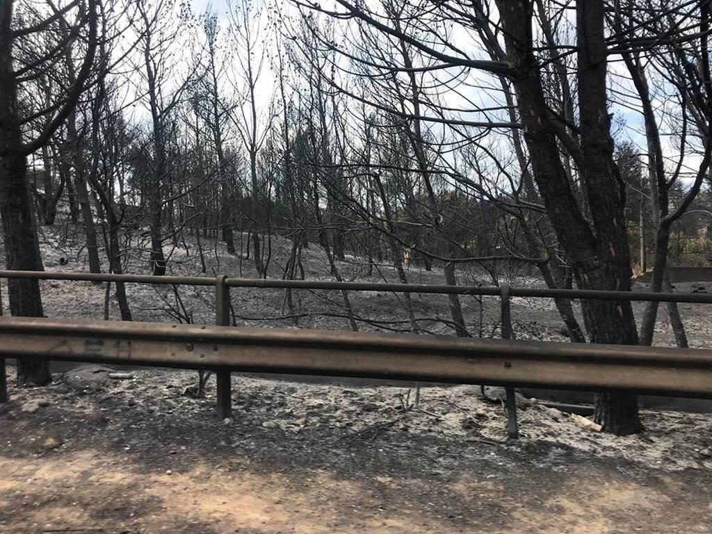 Φωτιά: Στις 3.586 οι αιτήσεις των πυρόπληκτων για τη χορήγηση εφάπαξ βοηθήματος