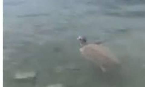 Πανικός στο Πόρτο Ράφτη  με θαλάσσια χελώνα - Δάγκωσε λουόμενους