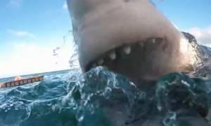 Συγκλονιστικό: Τρομακτική επίθεση καρχαρία (vid)