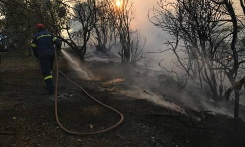 Φωτιά Εύβοια: Στο νοσοκομείο πυροσβέστης