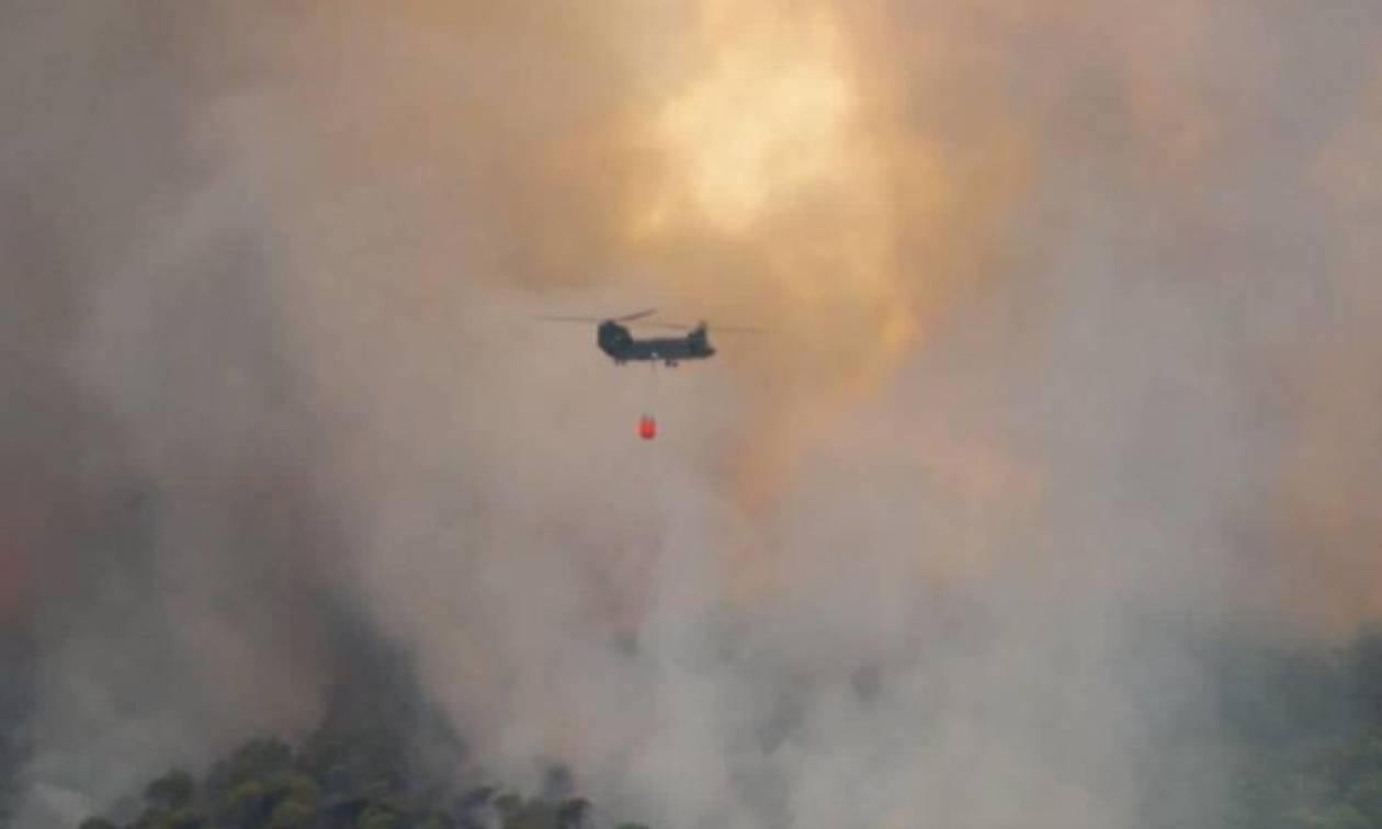 Φωτιά ΤΩΡΑ στην Ηλεία (pics)