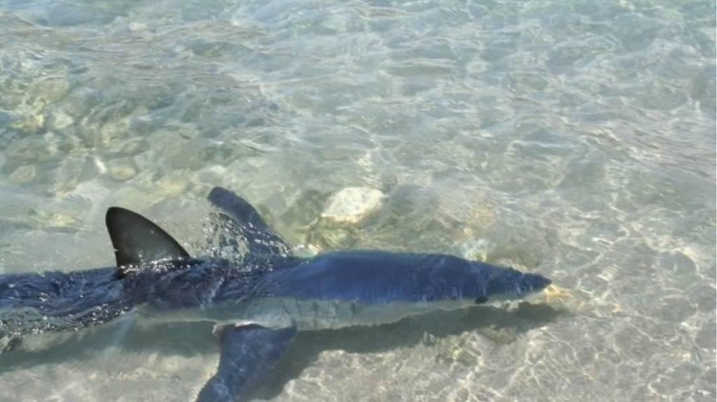 Τρόμος στην Κρήτη: Κολυμπούσαν στα ρηχά και τους πλησίασε ένας... καρχαρίας! (vid+pis)