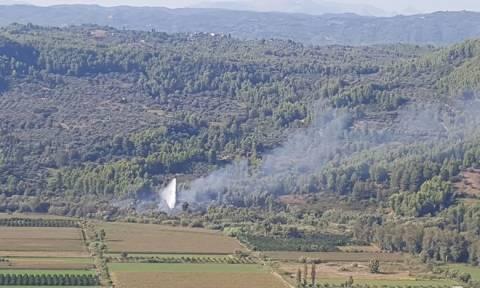Φωτιά Ηλεία: Υπό έλεγχο η πυρκαγιά στις όχθες του Αλφειού (vid+pics)
