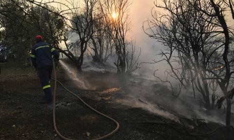 Φωτιά Εύβοια: Νέα ολονύχτια «μάχη» με τις φλόγες - Σύμμαχος των πυροσβεστών το σκοτάδι