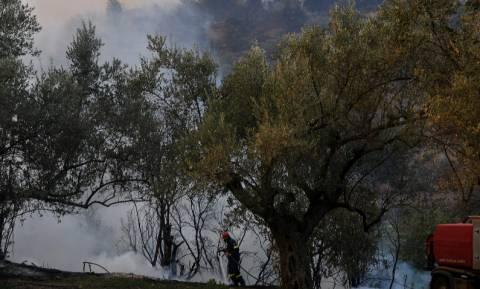 Φωτιά Εύβοια: Σε ύφεση η μεγάλη πυρκαγιά που κατέκαψε χιλιάδες στρέμματα