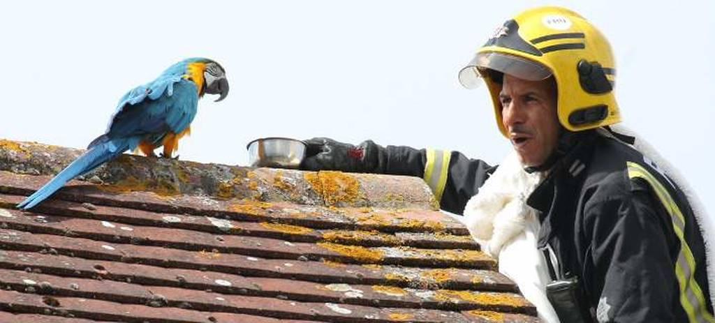 Αθυρόστομος παπαγάλος που μιλά ελληνικά, έβρισε τους πυροσβέστες που προσπάθησαν να τον σώσουν