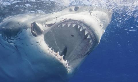 Ο «δολοφόνος» των ωκεανών σκορπά τον τρόμο και στο Αιγαίο: Ψαράδες έπιασαν λευκό καρχαρία!
