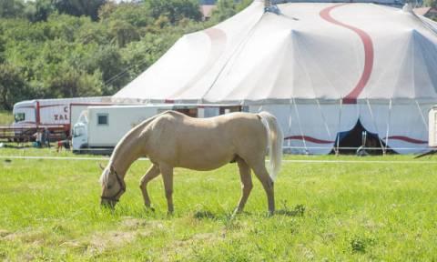 Άλογο το «έσκασε» από σόου και τραυμάτισε έξι άτομα
