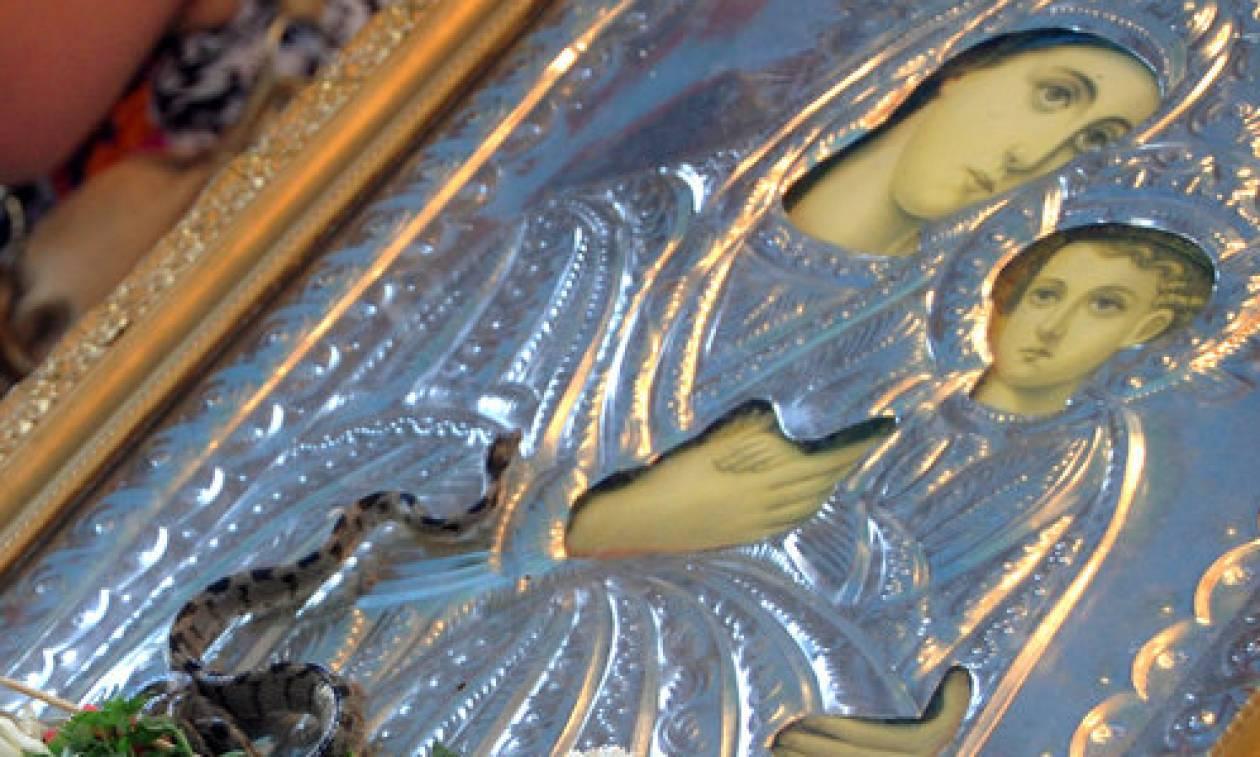 Κεφαλονιά: Εμφανίστηκαν και φέτος τα φιδάκια της Παναγίας