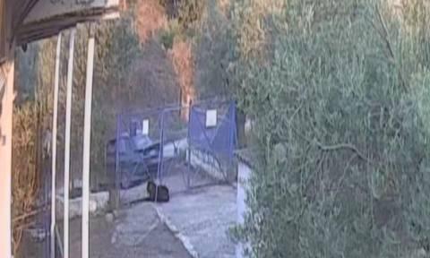 Βίντεο: Θρασύτατοι διαρρήκτες εισβάλλουν σε εξοχικό στην Κόρινθο – Δείτε τι έκαναν στο σκύλο!