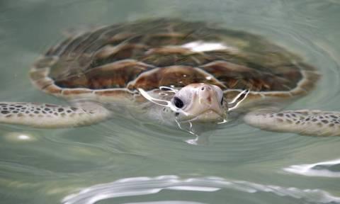 Εικόνες φρίκης στο Μεξικό: 122 θαλάσσιες χελώνες εντοπίστηκαν νεκρές