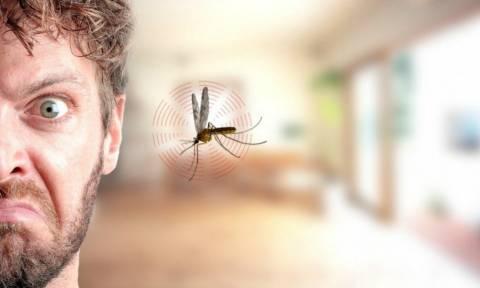 Πολύ Γέλιο: Αυτά θα μας έλεγαν τα Κουνούπια αν μας μιλούσαν!