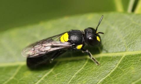 Πώς μια μέλισσα μπορεί να σώσει τον πλανήτη από τα πλαστικά!