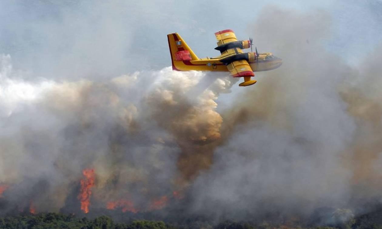 Φωτιά: Μεγάλη πυρκαγιά ΤΩΡΑ στη Δαφνιώτισσα Αμαλιάδας – Κοντά σε σπίτια οι φλόγες