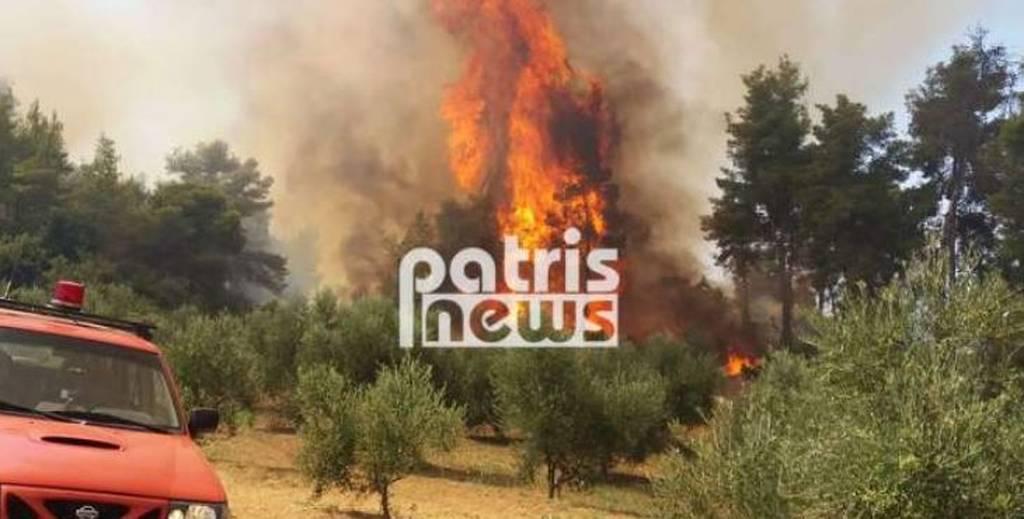 EKTAKTO - Φωτιά: Μεγάλη πυρκαγιά ΤΩΡΑ στην Αμαλιάδα - Εκκενώνεται χωριό