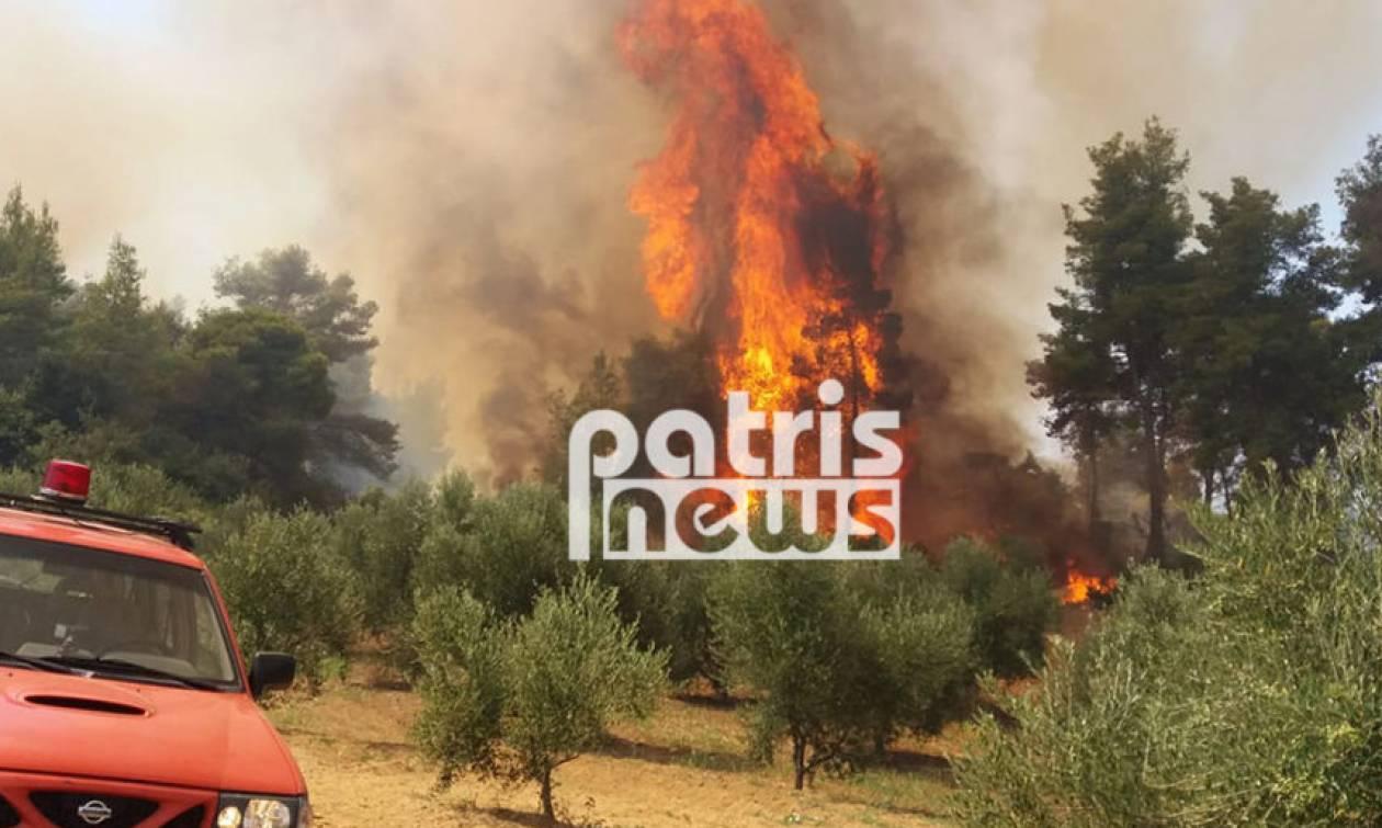 Φωτιά Αμαλιάδα: Μαίνεται η πυρκαγιά - Εκκενώθηκε το χωριό Δαφνιώτισσα