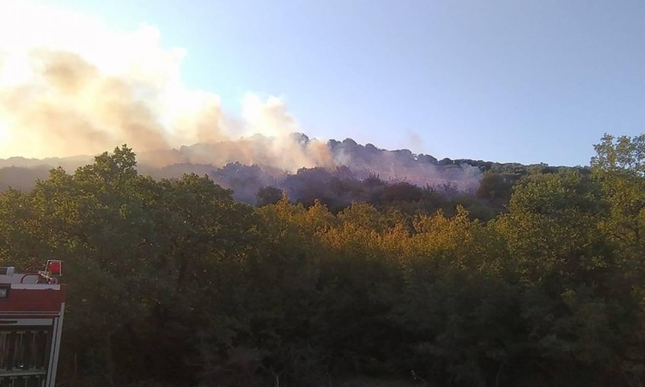 Φωτιά ΤΩΡΑ στην Αλεξανδρούπολη