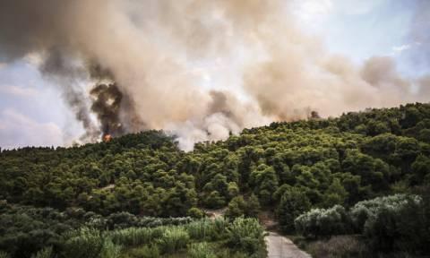 Φωτιά στην Αμαλιάδα: Σε χαράδρα δίνουν οι Πυροσβέστες τη μάχη με τις φλόγες (pics)