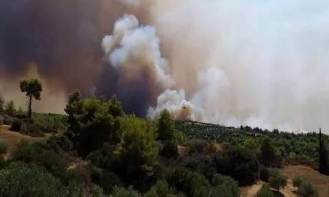 Σε ύφεση η φωτιά στη Δαφνιώτισσα Αμαλιάδας