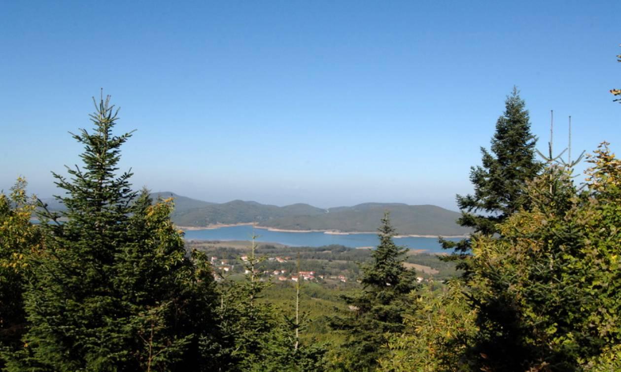 Στο ΦΕΚ η απόφαση για τη διαχείριση και εκμετάλλευση των εγκαταλελειμμένων ιδιωτικών δασών
