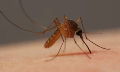 ΚΕΕΛΠΝΟ: 11 θάνατοι από τον ιό του Δυτικού Νείλου