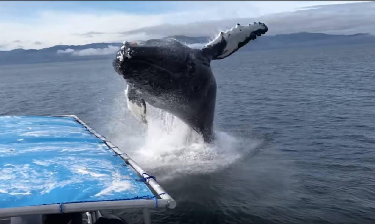 Με κομμένη την ανάσα: Φάλαινα ορμά σε πλοιάριο με τουρίστες! (vid)