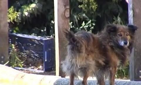 Λάρισα: Παρέμβαση εισαγγελέα για τη μαζική δηλητηρίαση αδέσποτων σκύλων (vid)